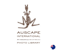 AUSCAPE INTERNATIONAL PHOTO LIBRARY